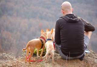 man-dogs-hiking-edge-cliff
