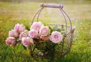 roses-blossom-bloom-pink