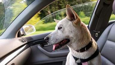 dog-car-ride-happy-travel-pet