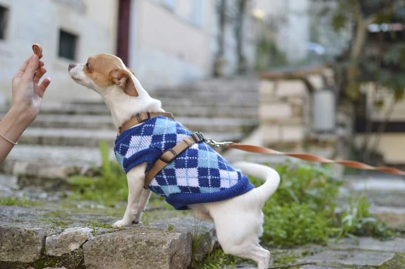 dog-puppy-animal-cute-pet-clothes